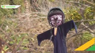 Video Bikin merinding ! Ada Boneka Jaelangkung di puing lumpur Petobo akibat gempa Palu Sulteng MP3, 3GP, MP4, WEBM, AVI, FLV Desember 2018