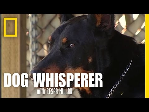 dog whisperer: bad dog!