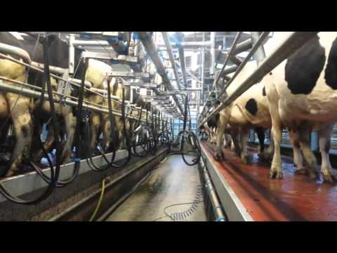 Video Milking parlour series: Paddy O Gorman, Co Tipperary download in MP3, 3GP, MP4, WEBM, AVI, FLV January 2017