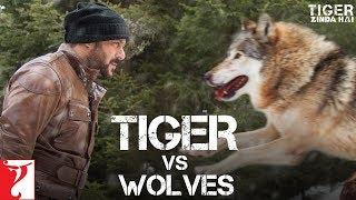 Nonton Tiger Vs Wolves    Promo   Tiger Zinda Hai   Salman Khan   Katrina Kaif   Ali Abbas Zafar Film Subtitle Indonesia Streaming Movie Download