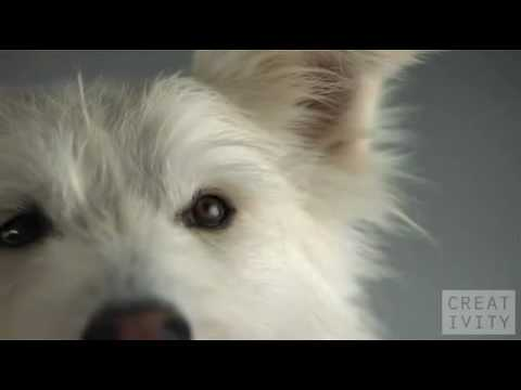 Pedigree Highspeed Dog Commercial