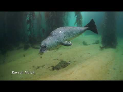 Diver Makes Friends With Adorable Harbor Seal