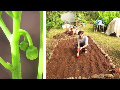 Jardinage avec Fred : Mise en place du potager