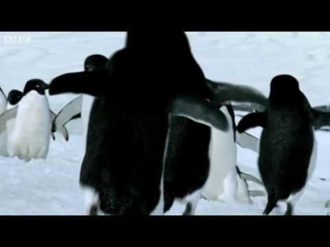 科學家在南極發現會飛的企鵝!