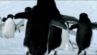 Do You Know Penguins Can Fly? :))