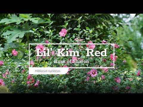 30 Seconds with Lil' Kim® Red