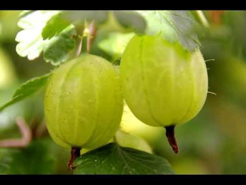 Chatpati Amla Candy Recipe IN HINDI URDU