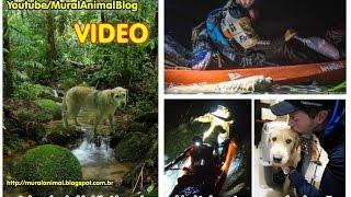 Nonton Stray Dog Joins Endurance Racers On Epic Trek Film Subtitle Indonesia Streaming Movie Download
