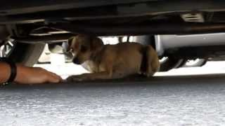 A must see dog rescue: Cora.  Please share and help this video go viral.
