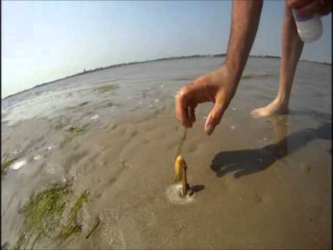 how to catch a razor fish