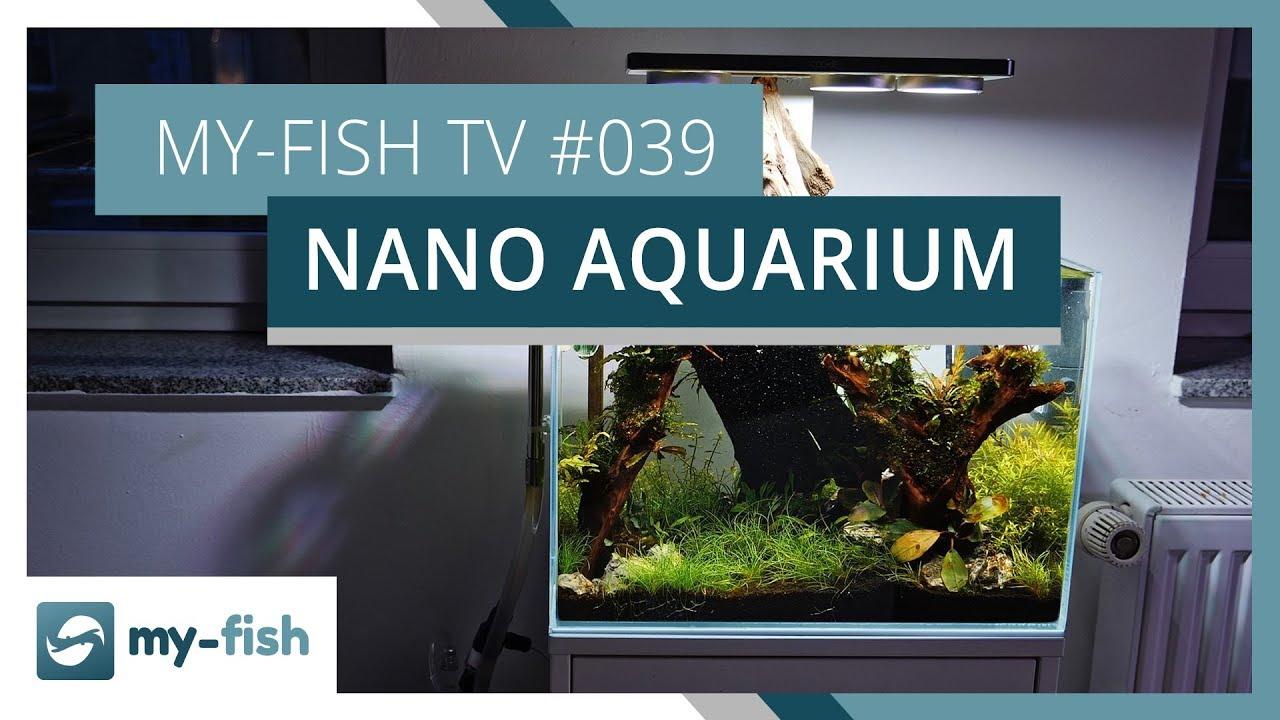 my-fish TV - Deine Nr. 1 Anlaufstelle für alle Themen rund um die Aquaristik 25