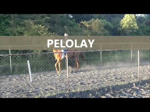 Adicto ala chilenera vol97 pelolay vs huasita