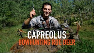 Ampuero Spain  city images : CAPREOLUS - BOWHUNTING ROE DEER - CAZA CON ARCO CORZO