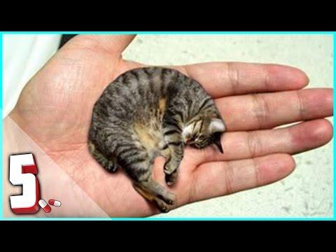 top 5 animali più piccoli al mondo