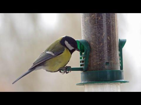 Jak i gdzie umieścić karmnik dla ptaków