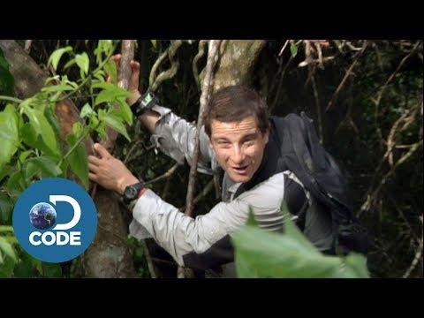 Bear Grylls in Borneo Jungle | Man vs Wild (1/6)