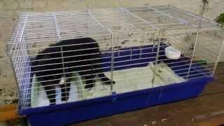 Käfighaltung für Katzen, artgerecht (Käfigkatze, funny cat compilation crazy lustig) - YouTube