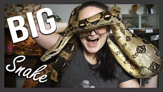 BIG SNAKE: How to handle! by Jossers Jungle