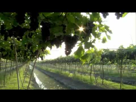 Siam Winery Presentation