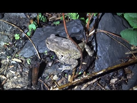 Frogs, Toads and Peepers: Oh My!