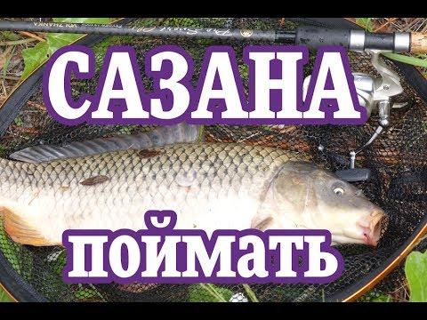 поплавочная рыбалка на сазана видео бесплатно