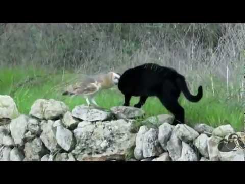OWL & CAT Nature is brilliant.. Love it