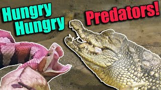 Feeding the PREDATORS at the RAD Zoo! (with Clint's Reptiles!) by Snake Discovery