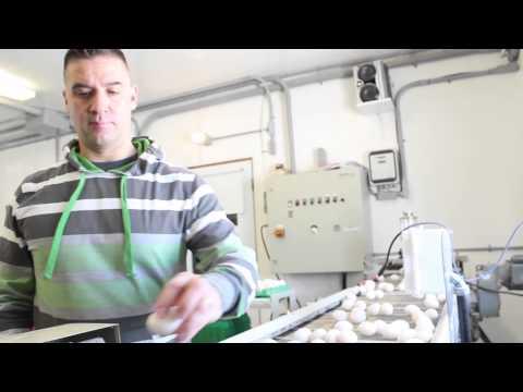 Rencontrez Danny et Hélène, des producteurs d'œufs.