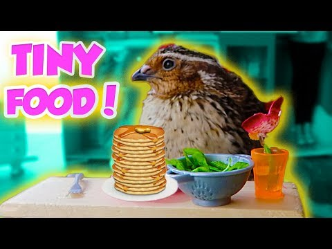 MAKING TINY FOOD FOR MY QUAILS! So Cute!