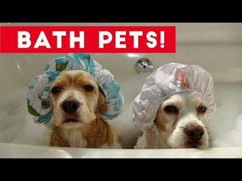 Funniest Pets Taking Baths Home Videos of 2017  Compilation | Funny Pet Videos (видео)