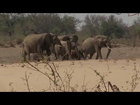 Τέλος στο εμπόριο αρφικανικών ελεφάντων – Διαφωνούν Ζιμπάμπουε και ΗΠΑ…