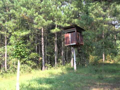 1,255 acres Wadley, AL