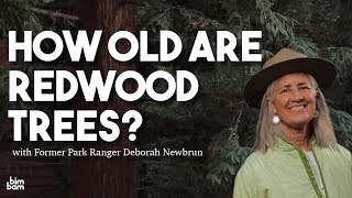 How Old Are Redwood Trees?