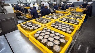 Video How it made Canned Tuna processing line in Factory MP3, 3GP, MP4, WEBM, AVI, FLV Agustus 2019