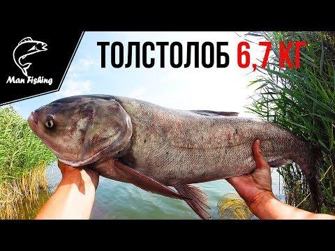 ловля толстолобика на троллинг видео