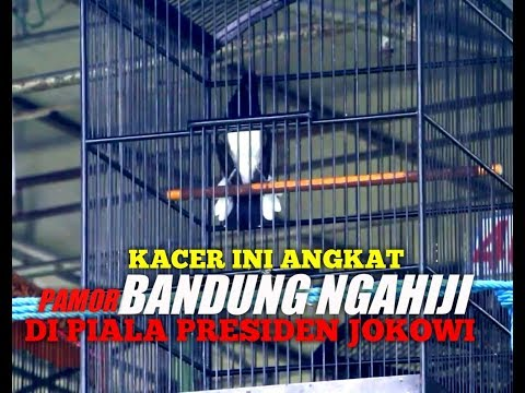 Video KACER Ini Angkat Pamor BANDUNG NGAHIJI Di Piala Presiden Jokowi download in MP3, 3GP, MP4, WEBM, AVI, FLV January 2017