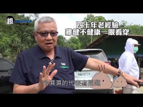 【鏡影音】為了雞 超秦董事長卓元裕再做十年