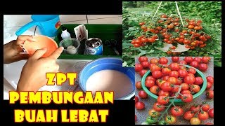 Video # TIS # Nutrisi Pembungaan Buah Lebat Jaminan Untung!|Cabe,Tomat,Buah |DIY Plant Growth Stimulants MP3, 3GP, MP4, WEBM, AVI, FLV November 2018