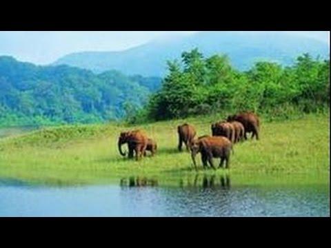 Природа Индии. Большое путешествие. Священная река. Ганг. Документальный фильм National Ge (видео)