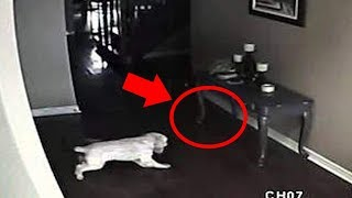 Video 5 Dogs That Saw Something Their Owners Couldn't See : Ghosts, ESP, & Paranormal MP3, 3GP, MP4, WEBM, AVI, FLV Maret 2019