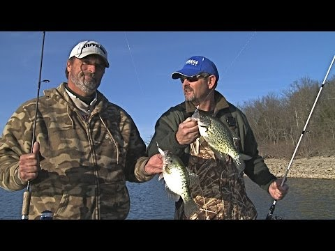 Transition Crappie