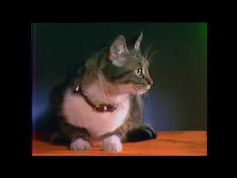 Clothilde - Fallait pas écraser la queue du chat - 1967