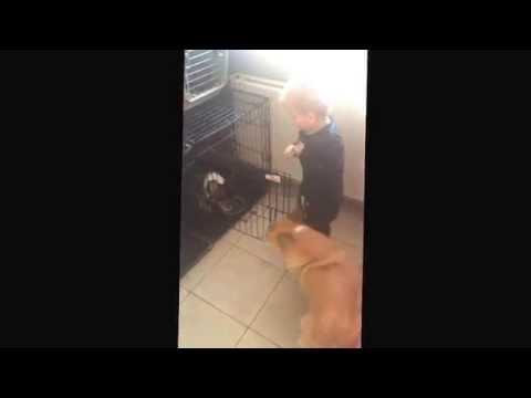 Querrás tener a este pequeño ayudante para que cuide de tu perro