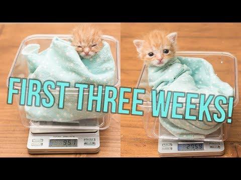 UPDATE: Baby Hank's First Weeks!