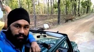 Pench India  city images : Selfie with Tiger video India Pench Nagpur.popular on yo