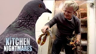 Gordon heads to the kitchen to check out the state of the stored food, and is absolutely disgusted with what he finds. The pigeon can't believe it either.If you liked this clip check out the rest of Gordon's channels:http://www.youtube.com/gordonramsayhttp://www.youtube.com/thefwordhttp://www.youtube.com/kitchennightmaresMore Gordon Ramsay:Website: http://www.gordonramsay.comFacebook: http://www.facebook.com/GordonRamsay01Twitter: http://www.twitter.com/GordonRamsay