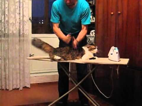 Russian Spa For Cats