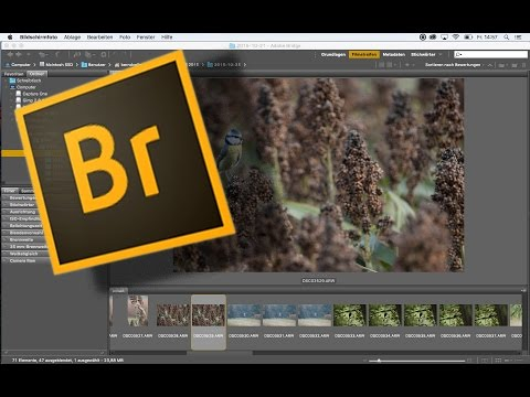 Adobe Bridge - kurz und knapp