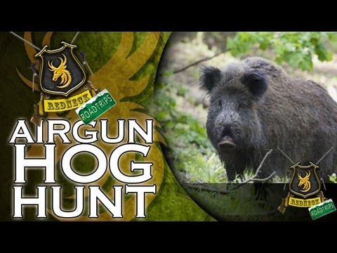 Airgun - Team Wild's Redneck Road Trip: Day 37. It's hog hunting with a twist today, as Ian shows Randy his way of hunting hogs. Equipped with his Benjamin Rogue .357...
