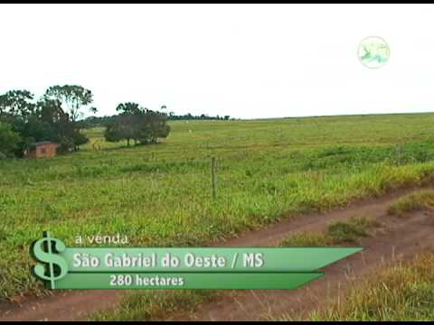 FAZENDA À VENDA EM SÃO GABRIEL DO OESTE / MS COM 280 HECTÁRES